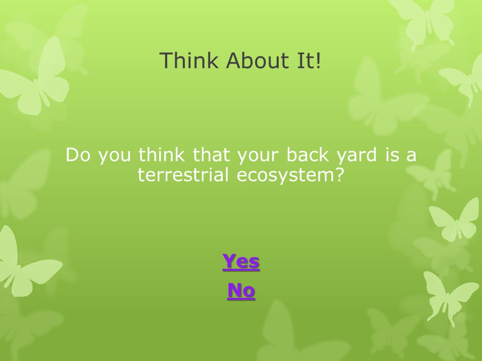 Do you think that your back yard is a terrestrial ecosystem Yes No