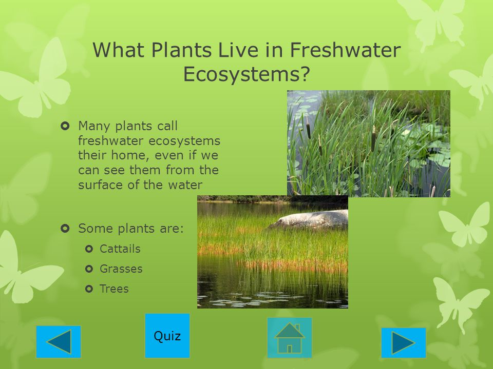 What Plants Live in Freshwater Ecosystems
