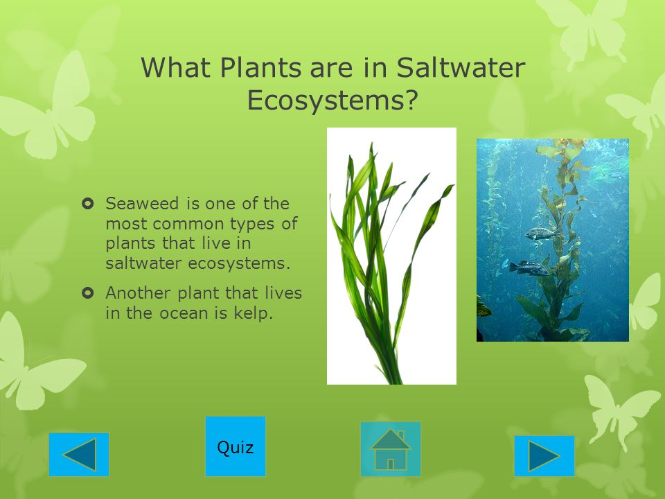 What Plants are in Saltwater Ecosystems