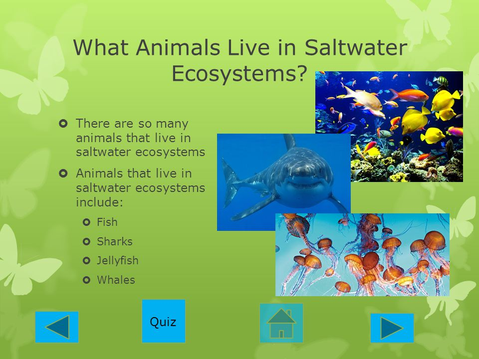 What Animals Live in Saltwater Ecosystems