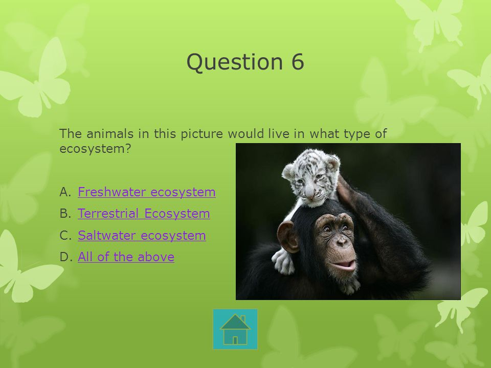 Question 6 The animals in this picture would live in what type of ecosystem Freshwater ecosystem.