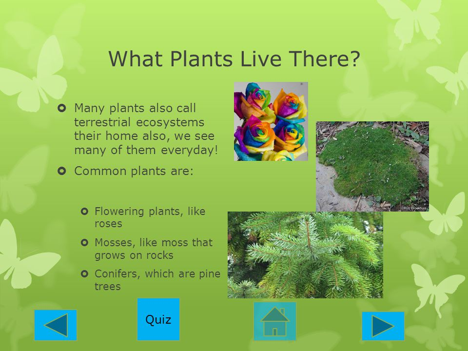 What Plants Live There Many plants also call terrestrial ecosystems their home also, we see many of them everyday!