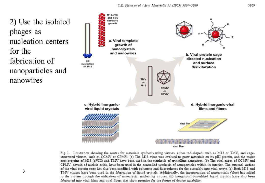 2) Use the isolated phages as nucleation centers for the