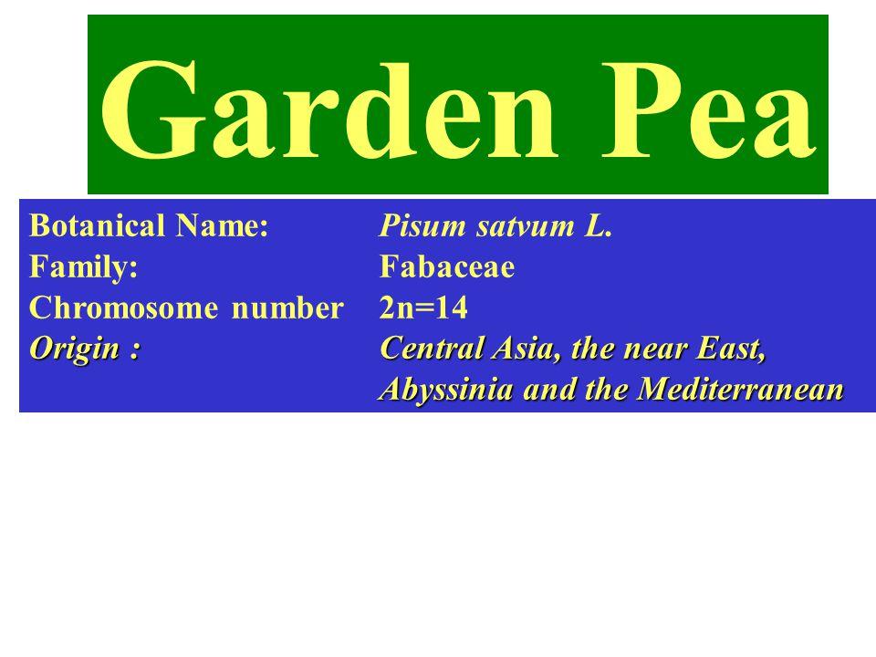 Garden Pea Botanical Name: Pisum satvum L. Family: Fabaceae