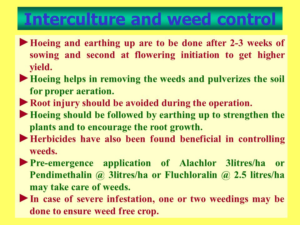 Interculture and weed control