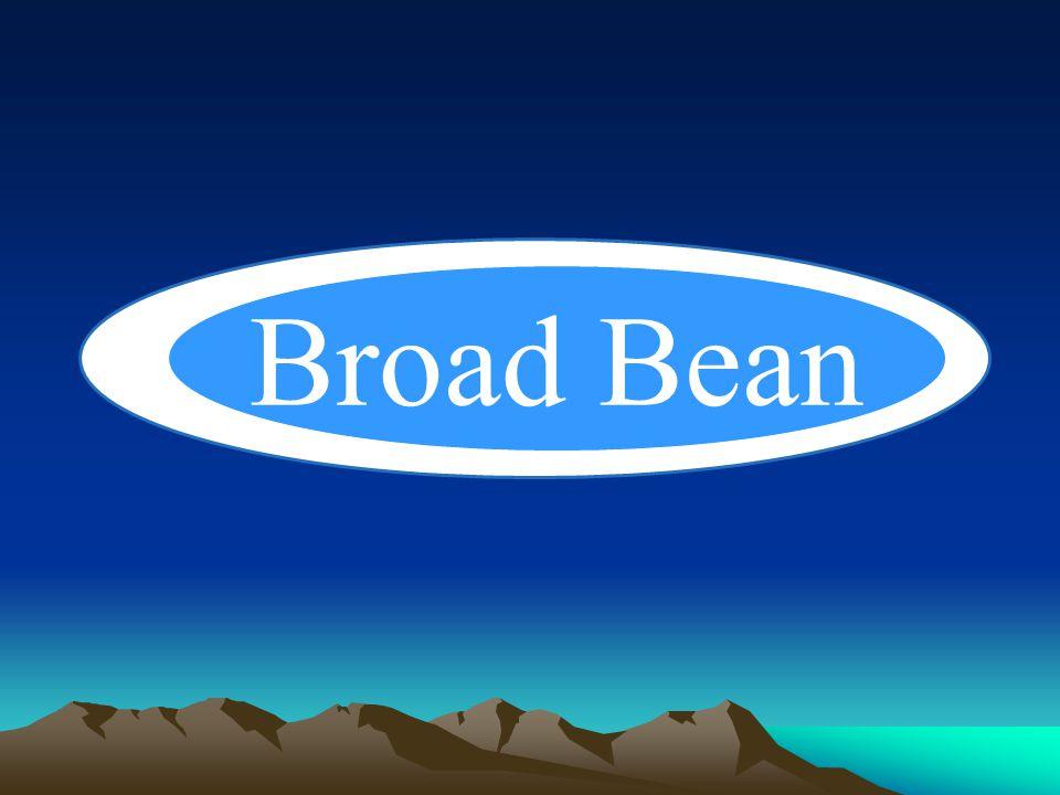 Broad Bean Broad Bean