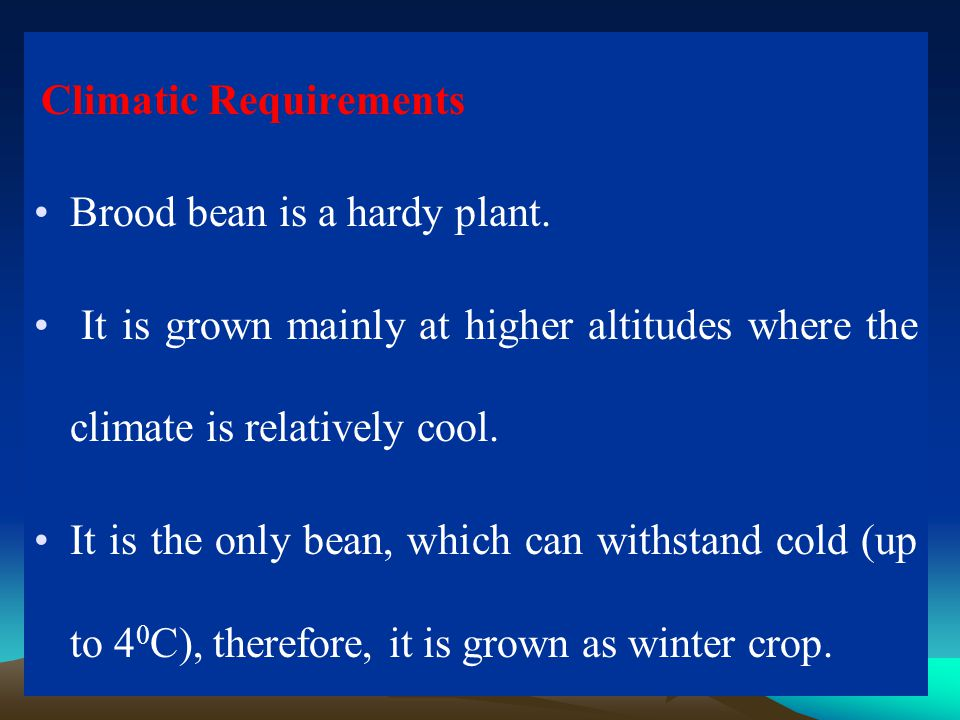 Brood bean is a hardy plant.