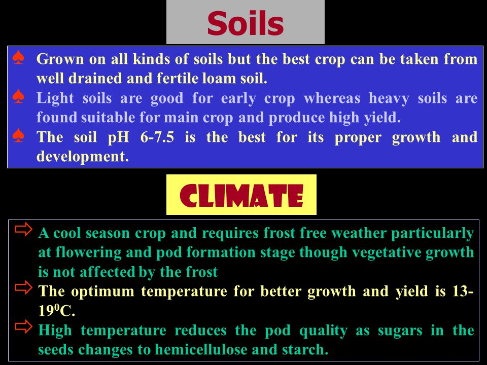 Soils Grown on all kinds of soils but the best crop can be taken from well drained and fertile loam soil.