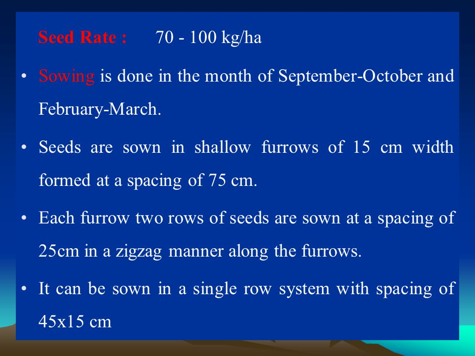 Seed Rate : 70 - 100 kg/ha Sowing is done in the month of September-October and February-March.