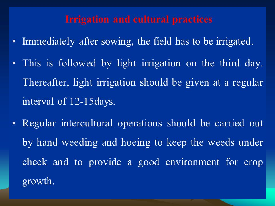 Irrigation and cultural practices