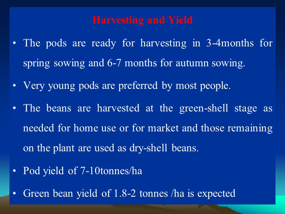 Harvesting and Yield The pods are ready for harvesting in 3-4months for spring sowing and 6-7 months for autumn sowing.