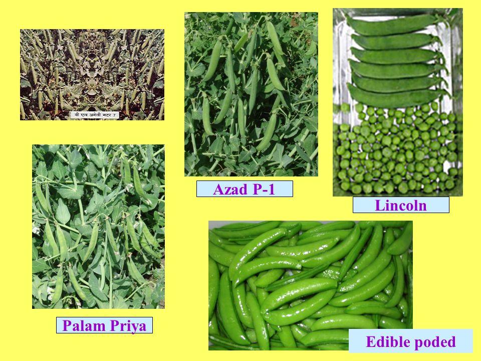 Azad P-1 Lincoln Palam Priya Edible poded