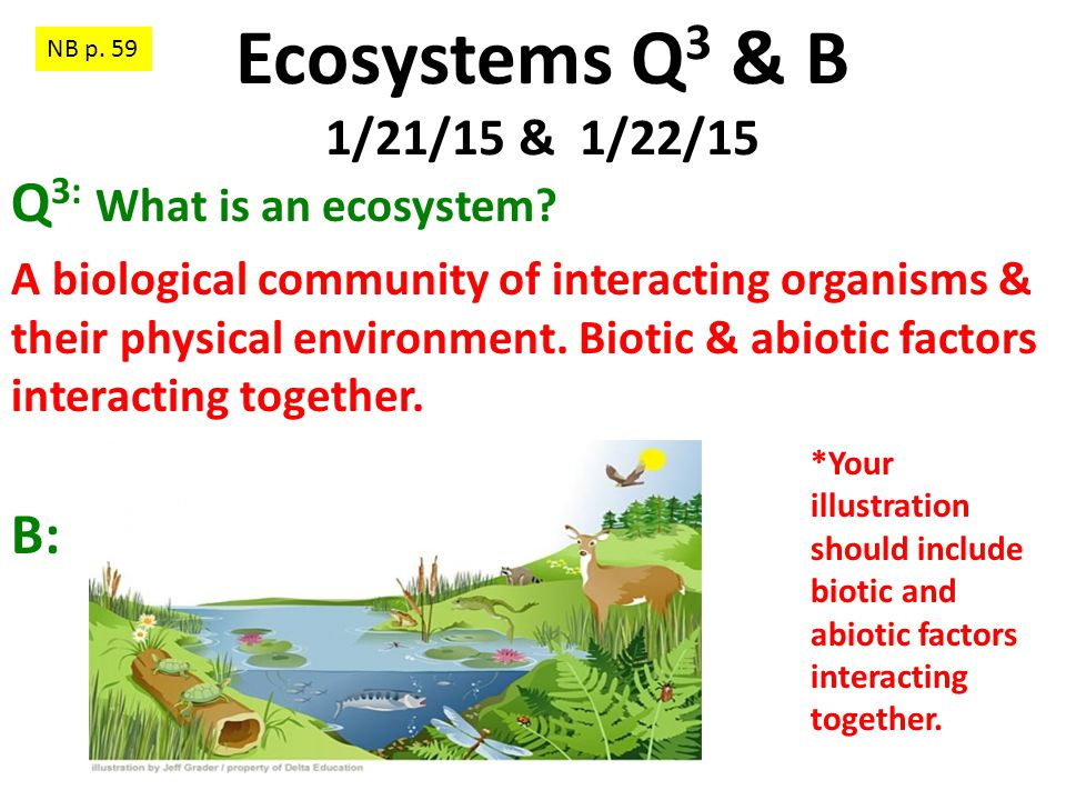 Ecosystems Q3 & B 1/21/15 & 1/22/15 Q3: What is an ecosystem B: