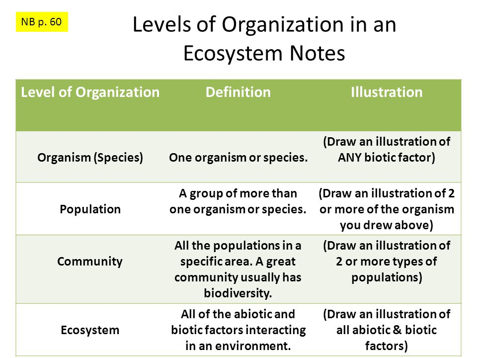 Levels of Organization in an Ecosystem Notes