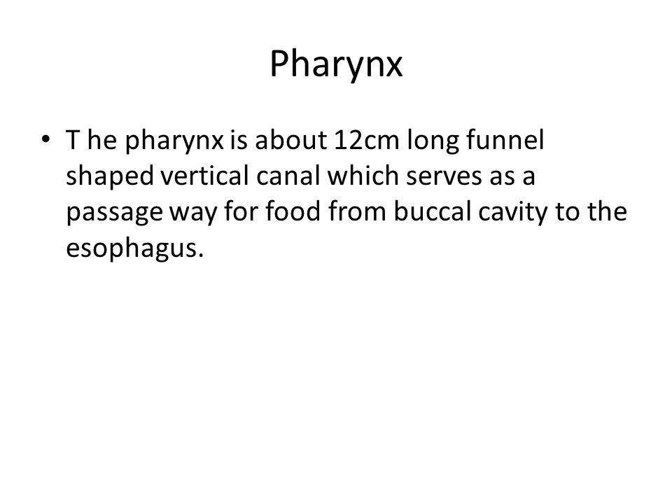 Pharynx T he pharynx is about 12cm long funnel shaped vertical canal which serves as a passage way for food from buccal cavity to the esophagus.