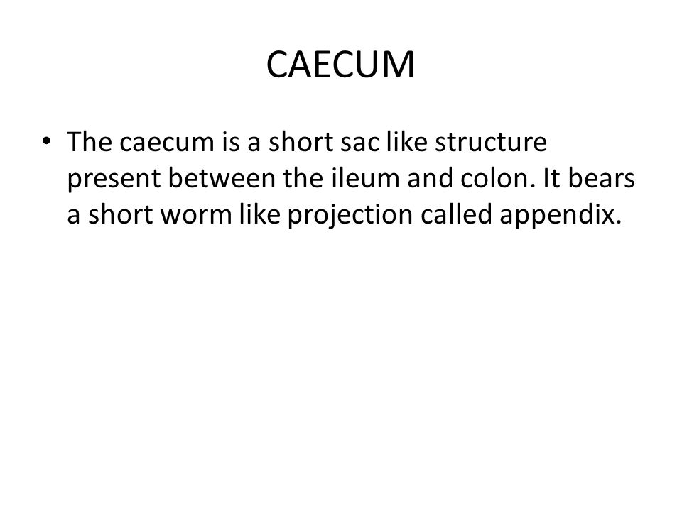 CAECUM The caecum is a short sac like structure present between the ileum and colon.