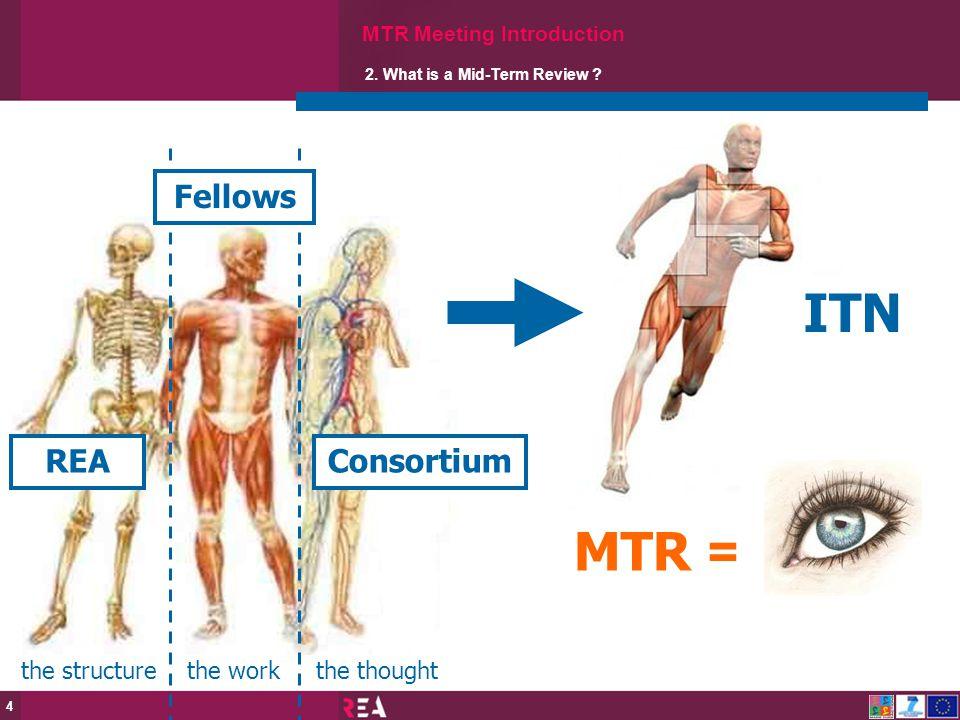 ITN MTR = Fellows Fellows REA Consortium Consortium the structure