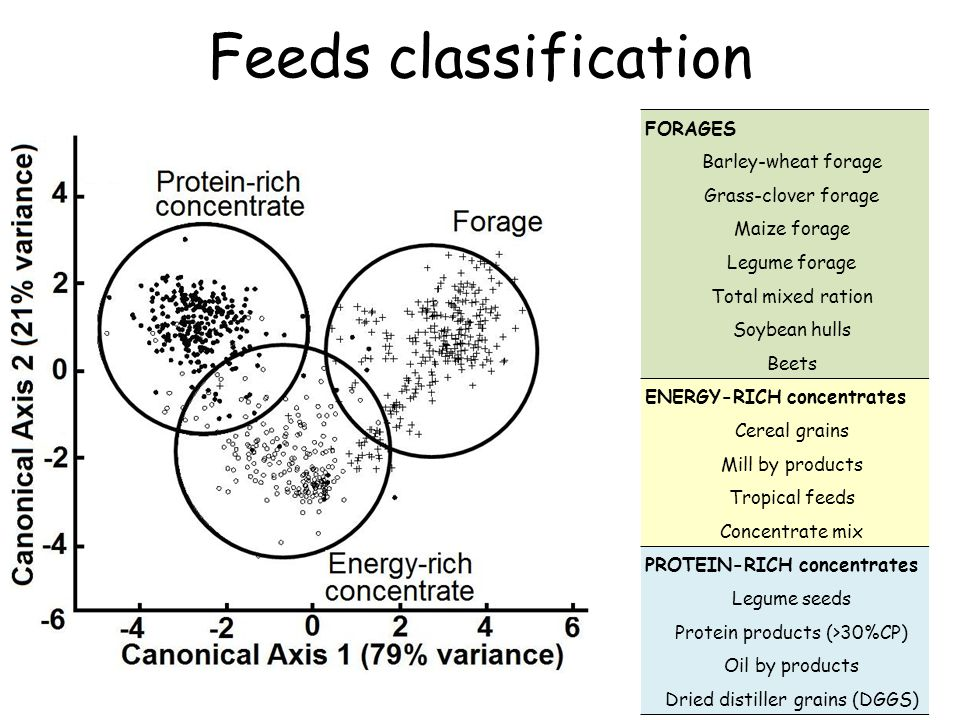 Feeds classification FORAGES Barley-wheat forage Grass-clover forage