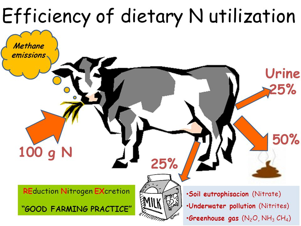 Efficiency of dietary N utilization