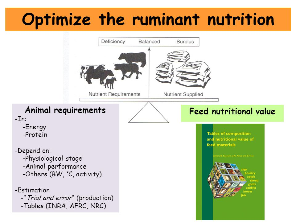 Optimize the ruminant nutrition Feed nutritional value