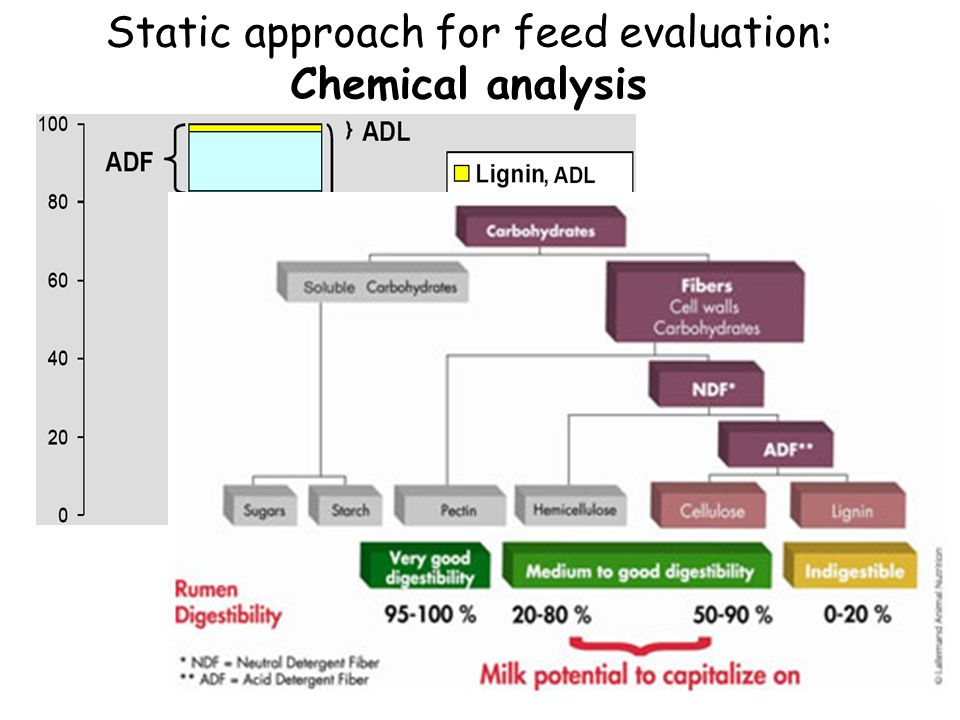 Static approach for feed evaluation: Chemical analysis