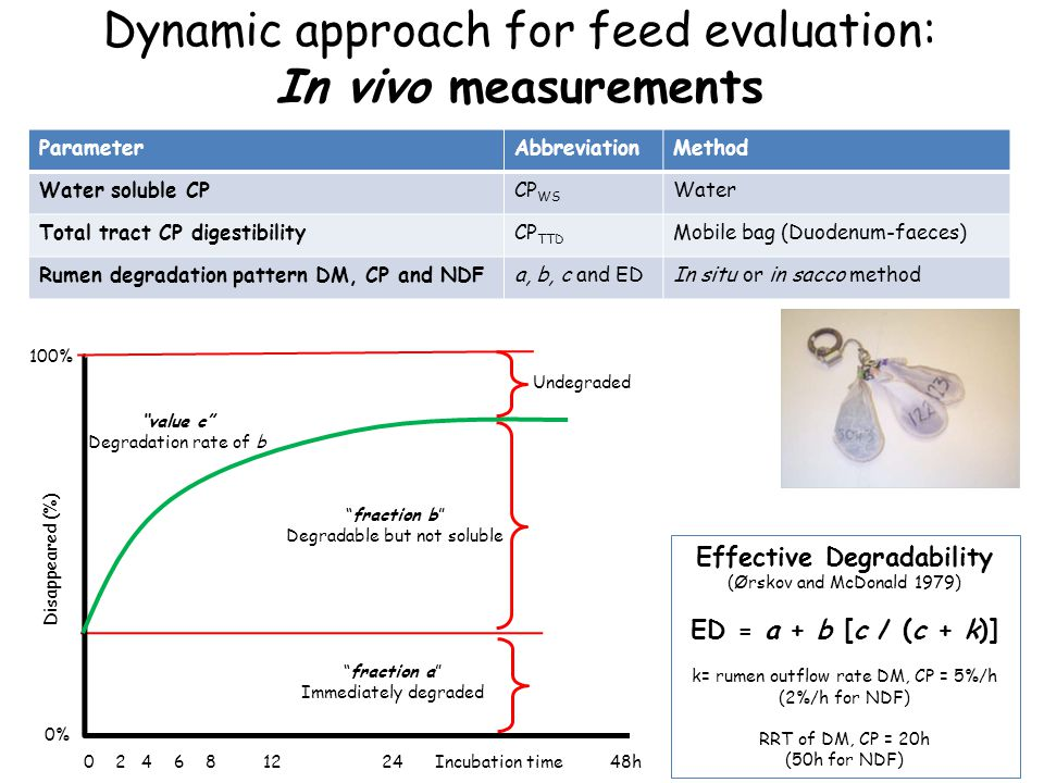 Dynamic approach for feed evaluation: In vivo measurements