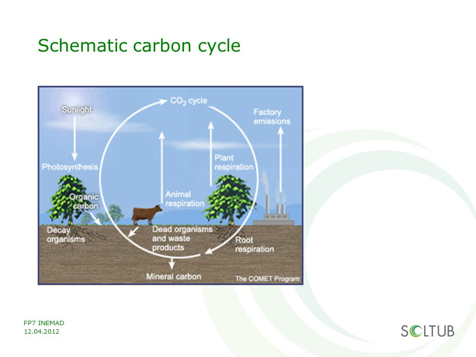 Schematic carbon cycle