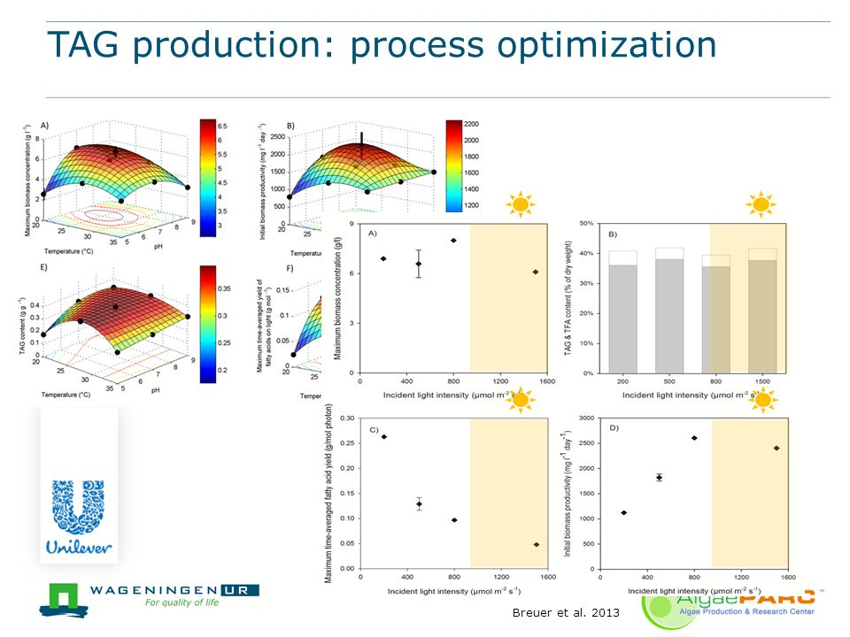TAG production: process optimization