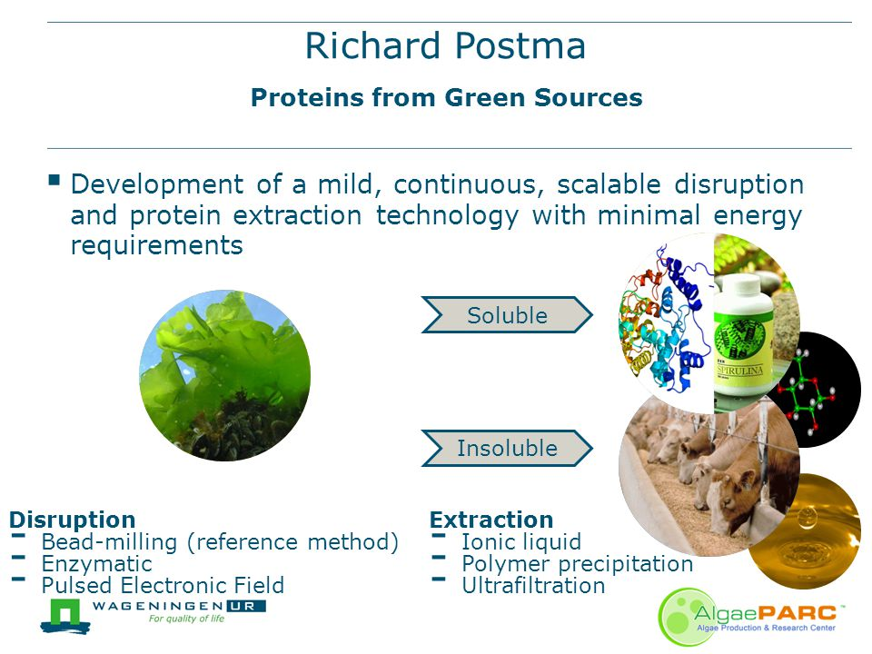Richard Postma Proteins from Green Sources