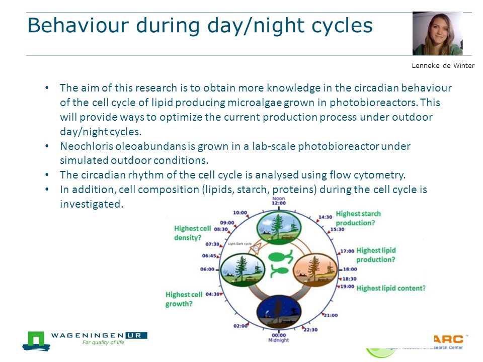 Behaviour during day/night cycles
