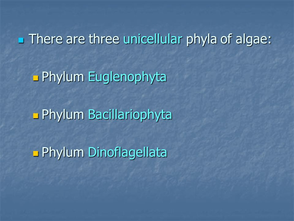 There are three unicellular phyla of algae: