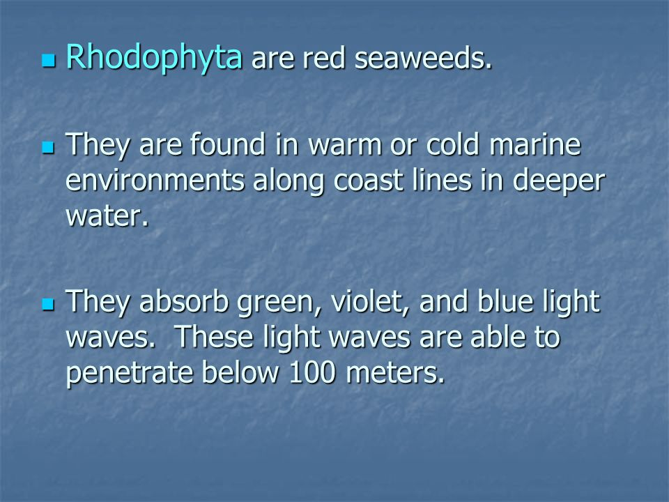 Rhodophyta are red seaweeds.
