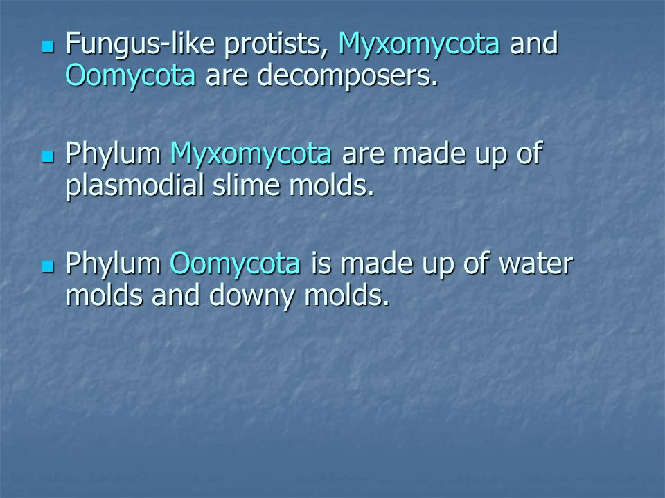 Fungus-like protists, Myxomycota and Oomycota are decomposers.