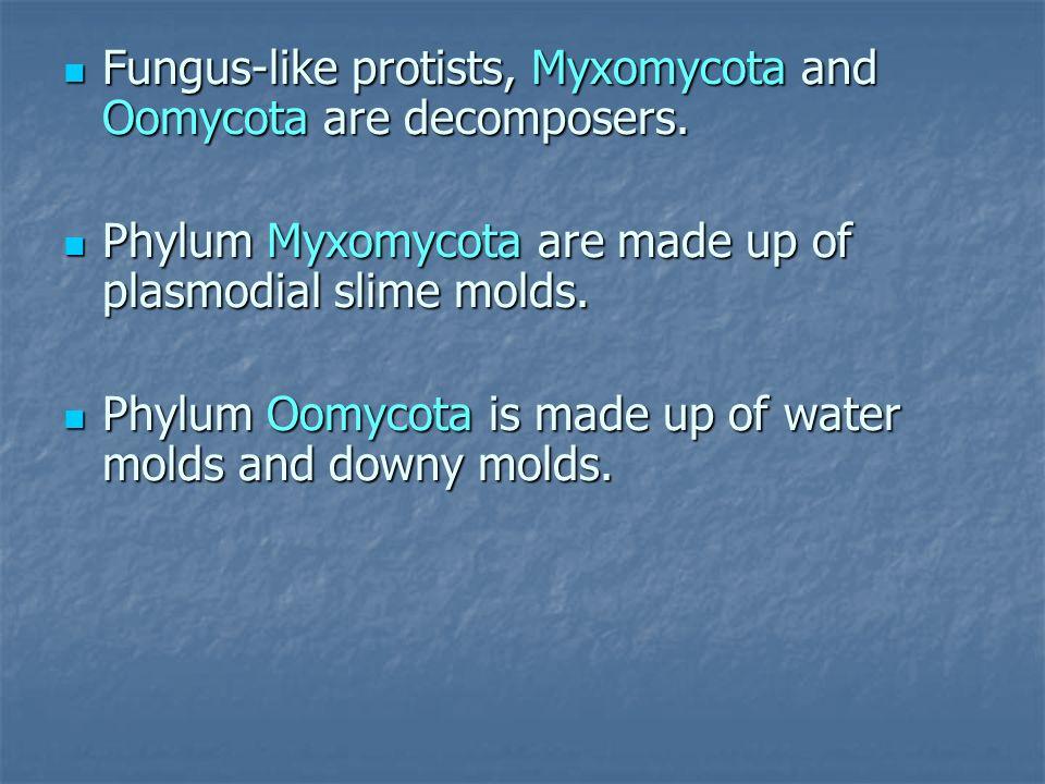 Fungus-like protists, Myxomycota and Oomycota are decomposers.