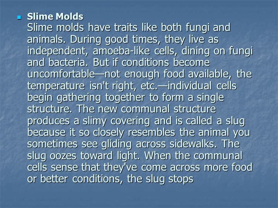 Slime Molds Slime molds have traits like both fungi and animals