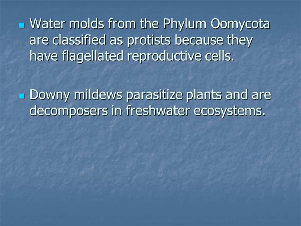 Water molds from the Phylum Oomycota are classified as protists because they have flagellated reproductive cells.