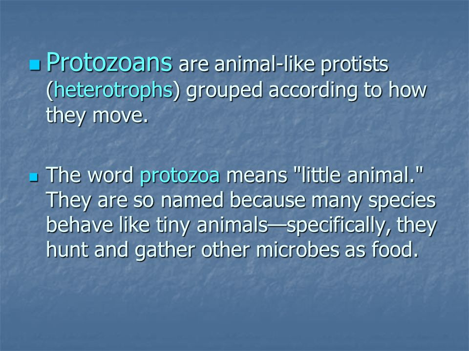 Protozoans are animal-like protists (heterotrophs) grouped according to how they move.