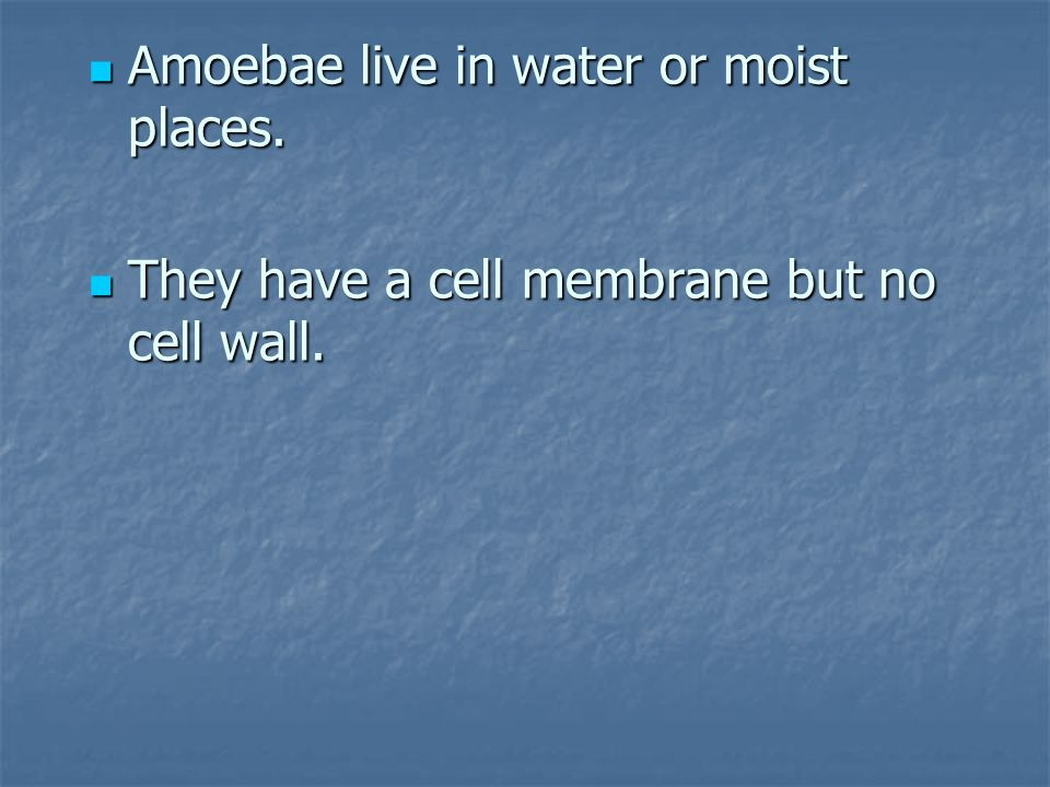 Amoebae live in water or moist places.