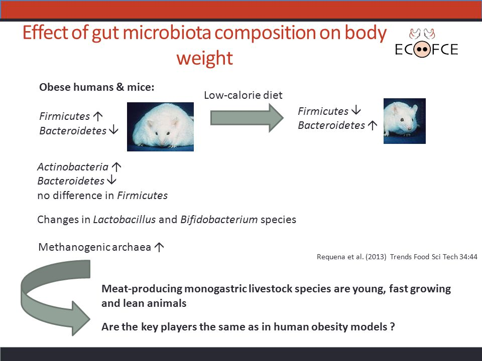 Effect of gut microbiota composition on body weight