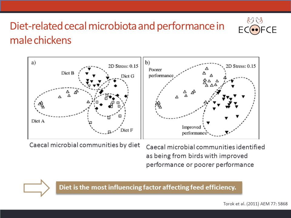 Diet-related cecal microbiota and performance in male chickens