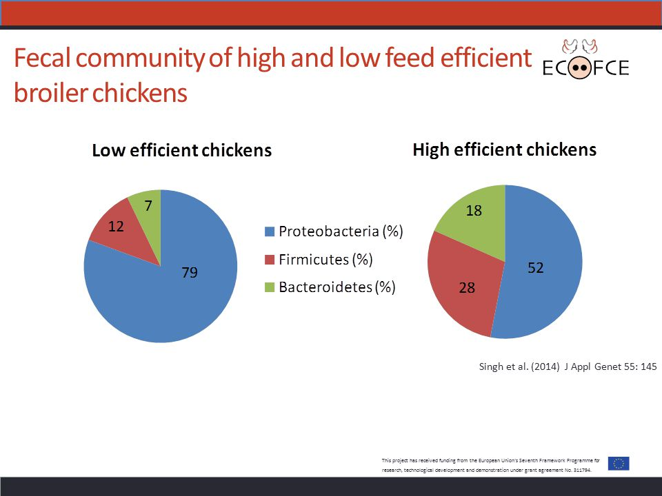 Fecal community of high and low feed efficient broiler chickens