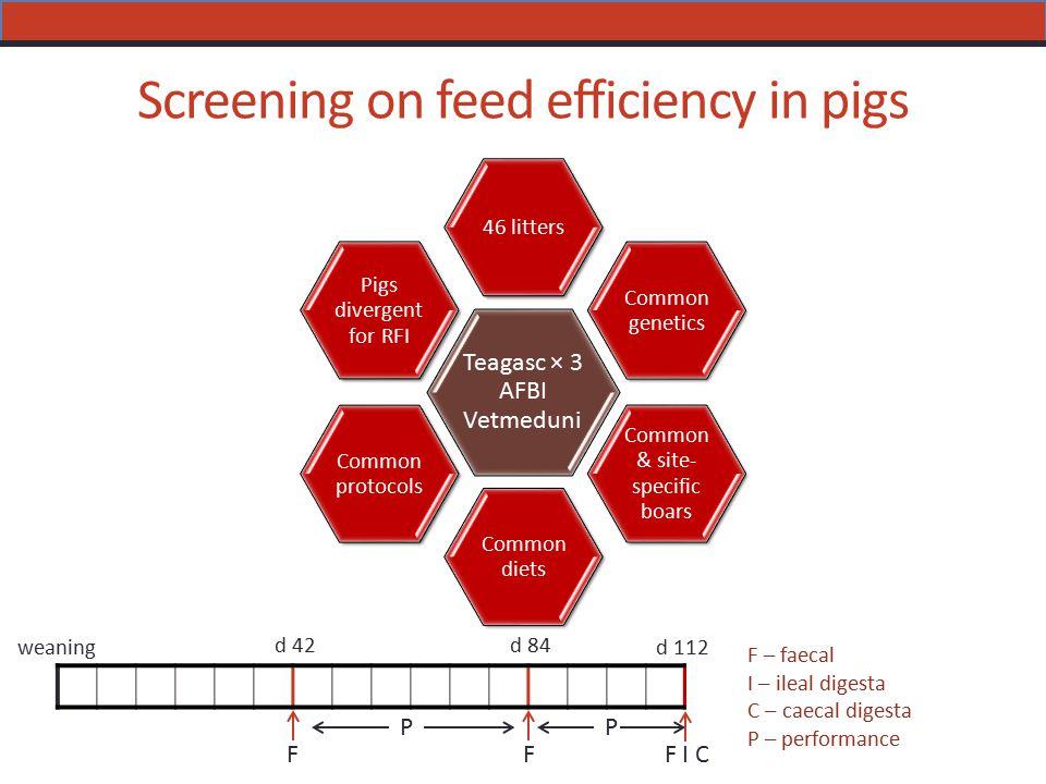 Screening on feed efficiency in pigs