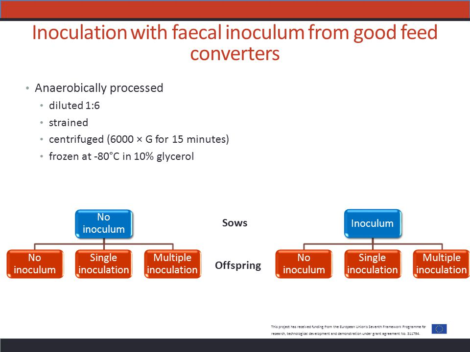 Inoculation with faecal inoculum from good feed converters