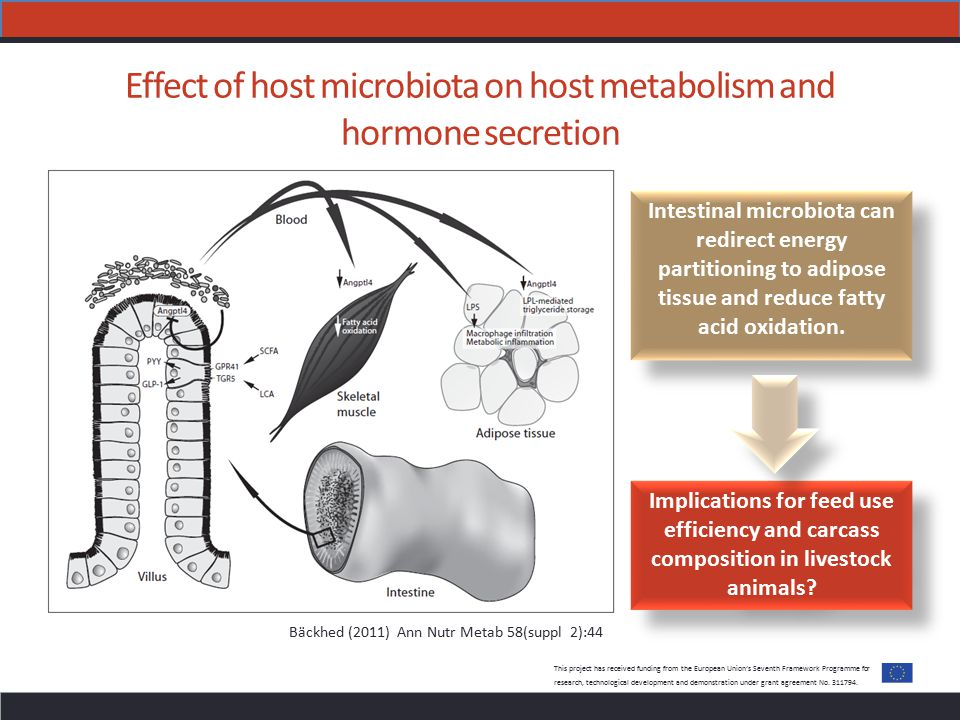 Effect of host microbiota on host metabolism and hormone secretion