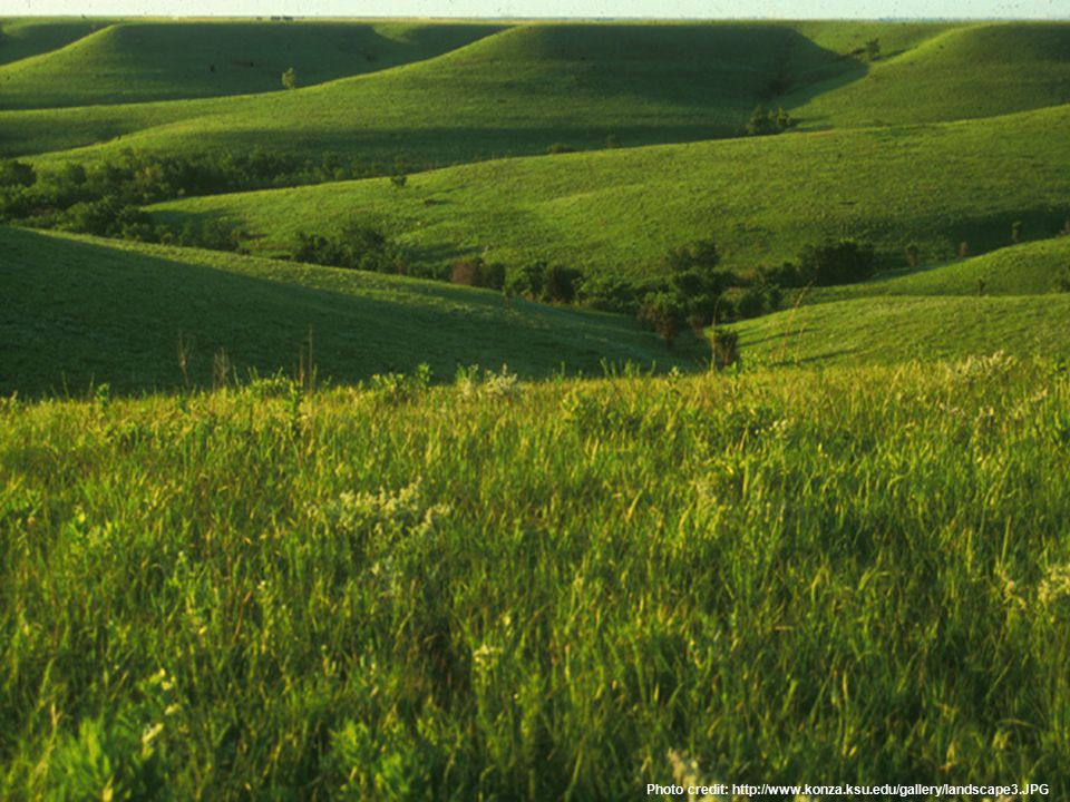 Photo credit: http://www.konza.ksu.edu/gallery/landscape3.JPG