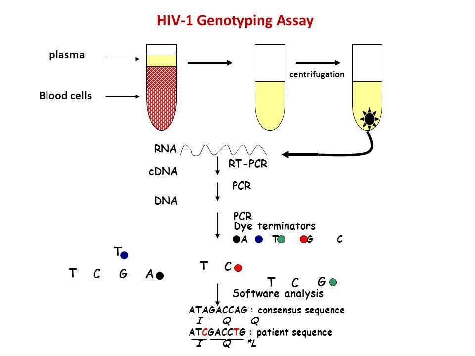 HIV-1 Genotyping Assay plasma Blood cells T T C T C G A T C G RNA