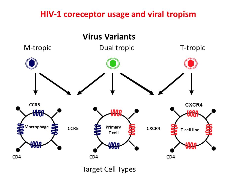 HIV-1 coreceptor usage and viral tropism