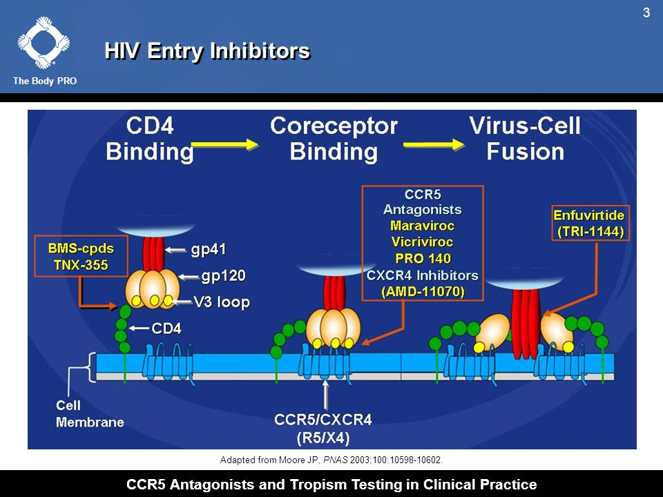 Targets Involved in HIV Entry
