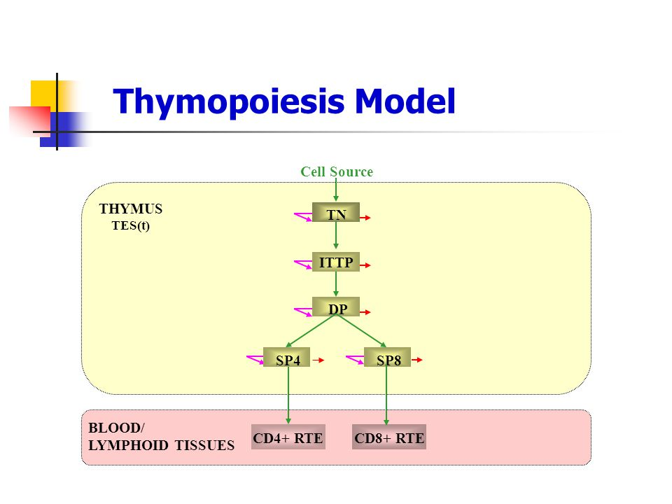 Thymopoiesis Model Cell Source THYMUS TN ITTP DP SP4 SP8 BLOOD/