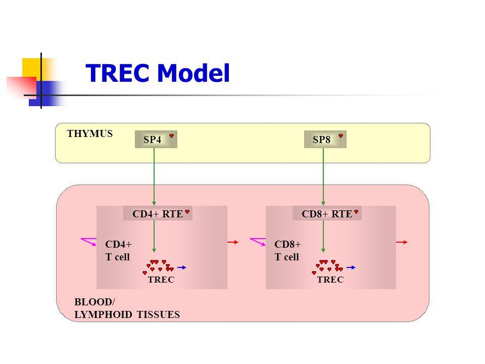 TREC Model THYMUS SP4 SP8 CD4+ RTE CD8+ RTE CD4+ T cell CD8+ T cell